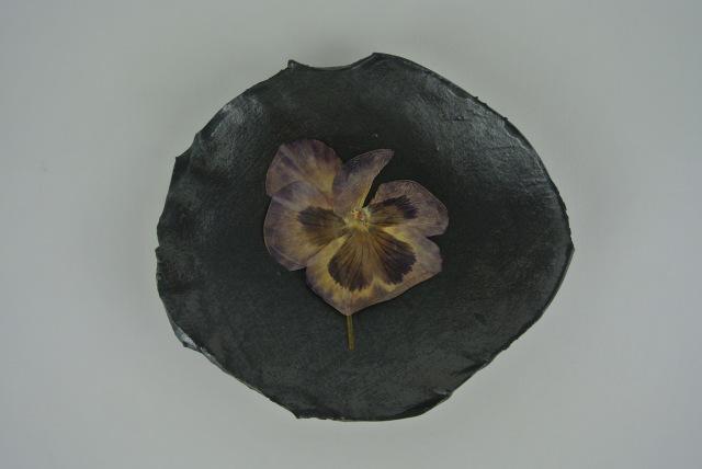 Violet carnation above