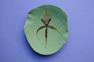 green petal orchid 2